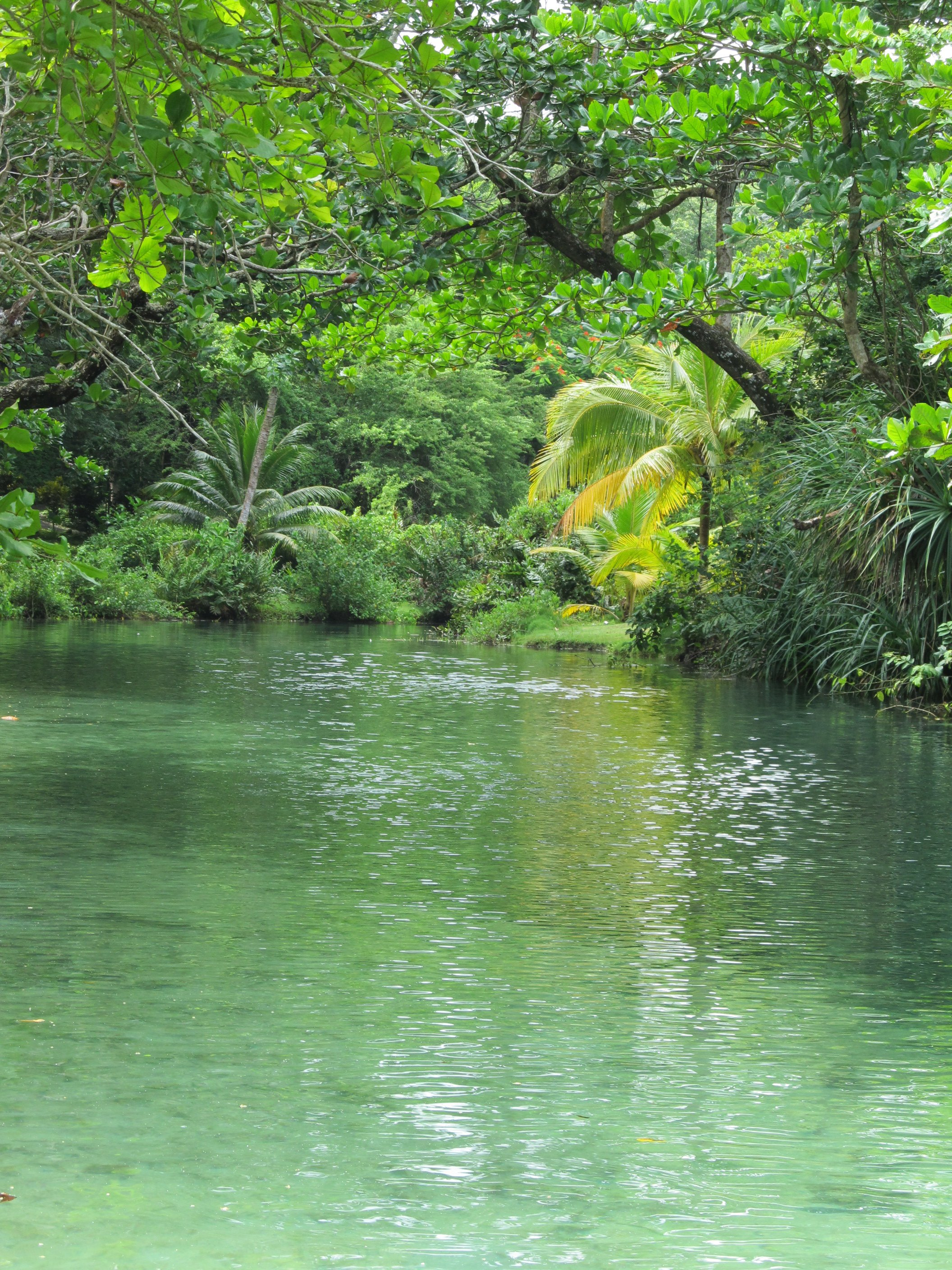 The River at Frenchman's Cove, Jamaica