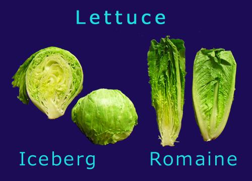 iceberg-romaine-lettuce