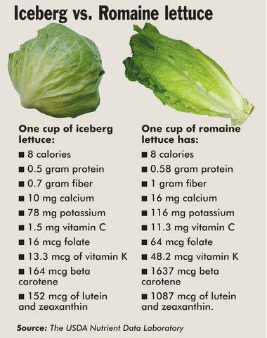 iceberg-vs-romaine-lettuce
