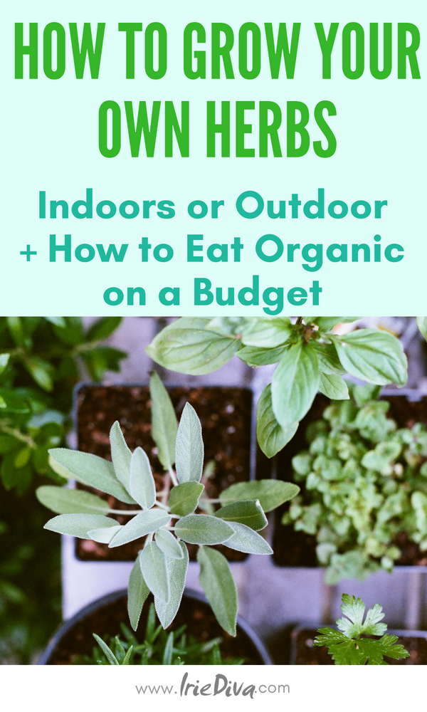 How to grow herbs indoor or outdoor. Grow organic herbs outdoor or in small spaces and learn to eat organic on a budget