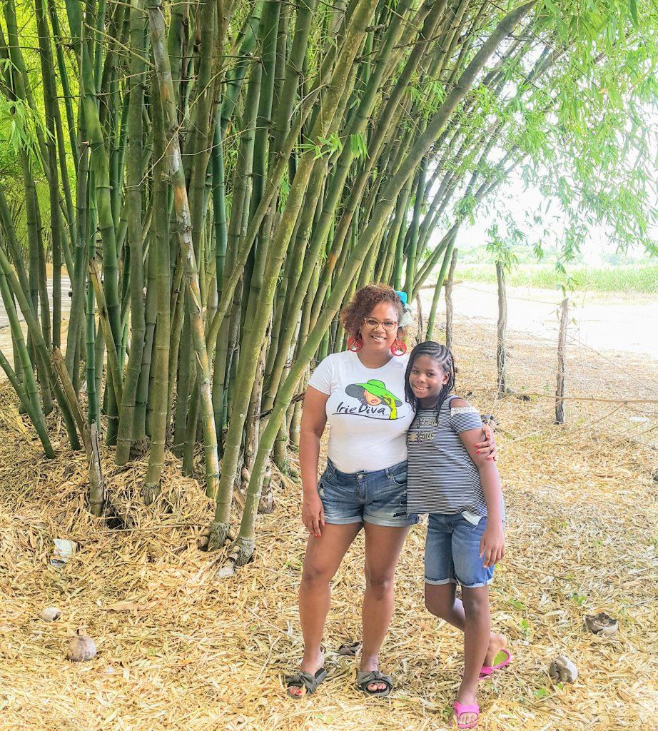 Holland Bamboo Avenue